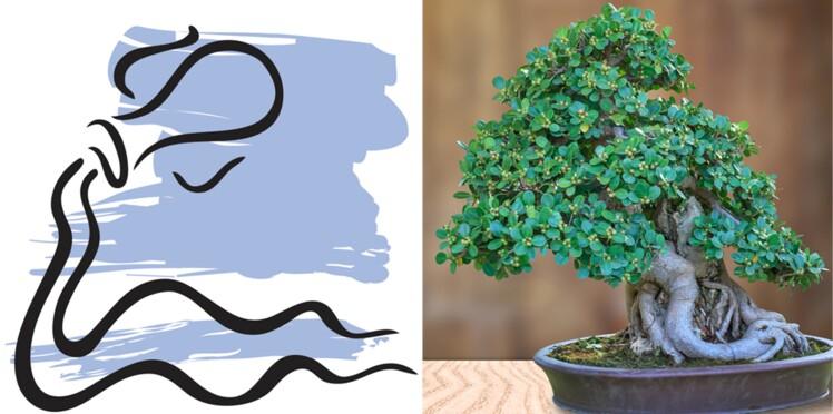 La plante porte-bonheur du Verseau : le bonsaïs