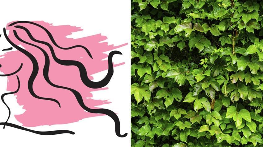 La plante porte-bonheur du Vierge : le lierre