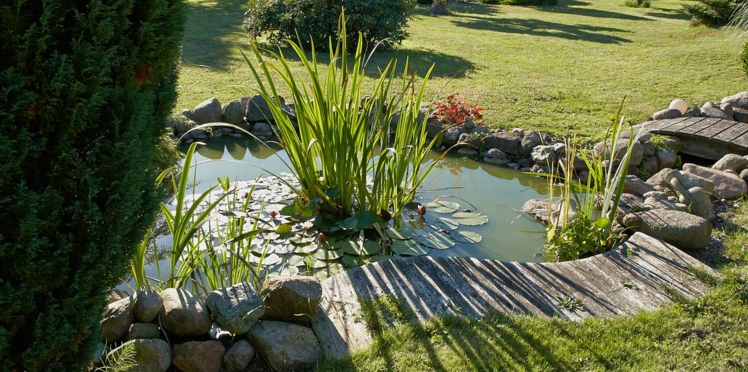 Bassin de jardin préformé, hors sol… On plonge