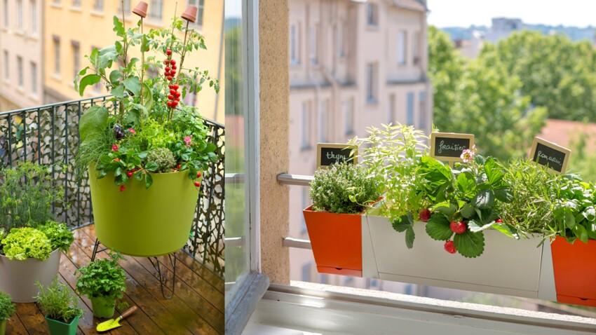 Comment composer une jardinière gourmande ?