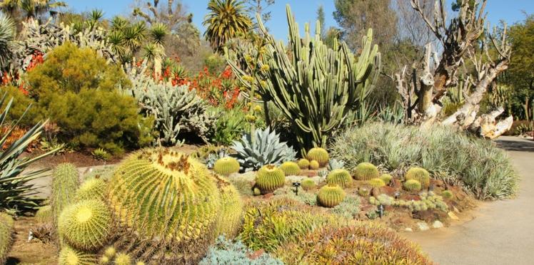 Comment créer un jardin mexicain ?