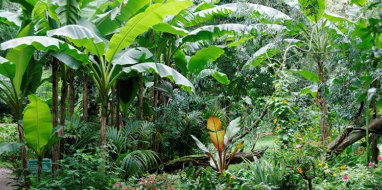 Comment créer un jardin tropical ?