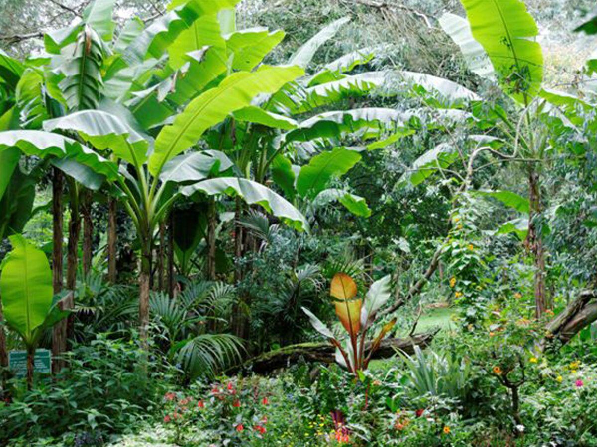 Photo Petit Jardin Exotique comment créer un jardin tropical ? : femme actuelle le mag