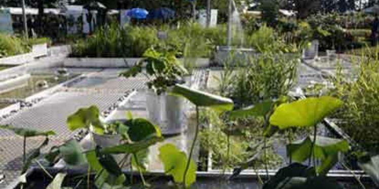 Economiser l'eau au jardin
