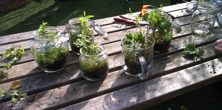 Faire un terrarium : l'astuce pour de belles boutures