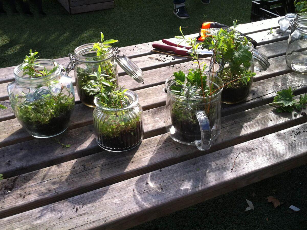 Comment Faire Un Terrarium Plante Grasse terrarium : l'astuce pour de belles boutures