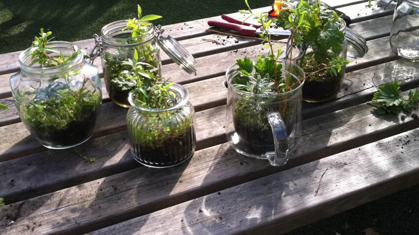 Faire un terrarium : notre astuce pour de belles boutures
