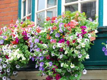 Comment réussir la composition d'une jardinière