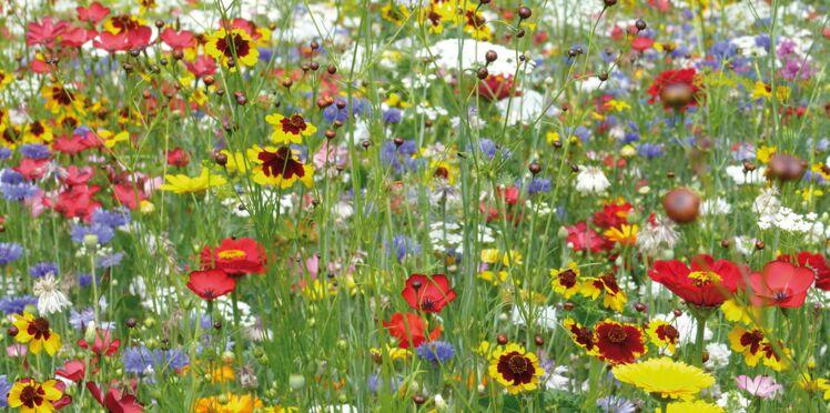 Les fleurs sauvages, belles et faciles à vivre