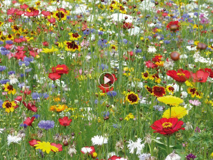 Les fleurs sauvages, belles et faciles à vivre : Femme ...