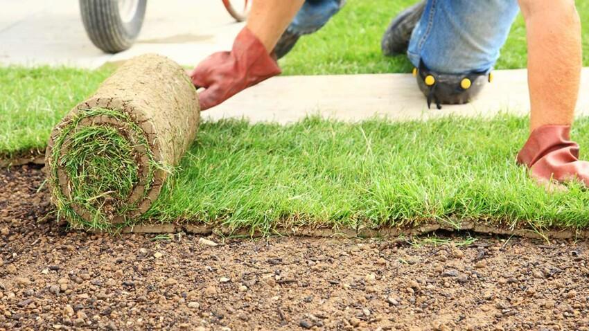 Gazon à semer ou en rouleaux : bien choisir selon l'entretien