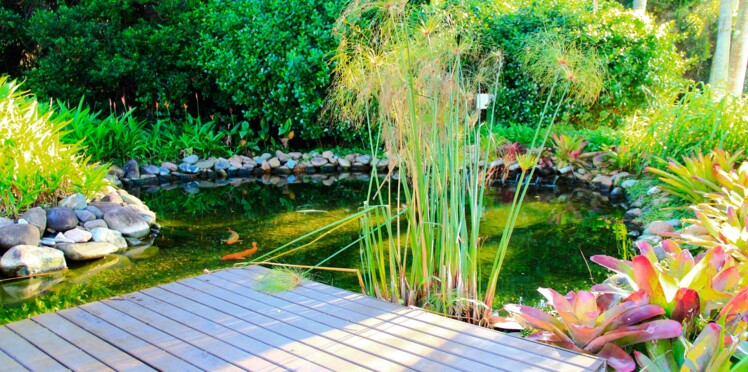 Installer un bassin dans son jardin : mode d'emploi