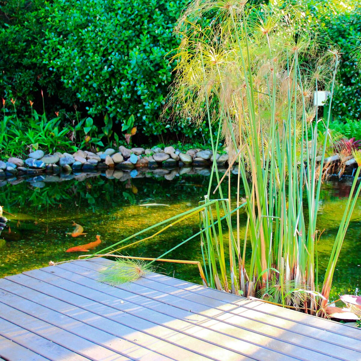 Bassin Préformé Hors Sol installer un bassin dans son jardin : mode d'emploi : femme