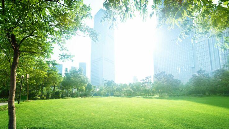 Jardin : 5 idées pour préserver la planète