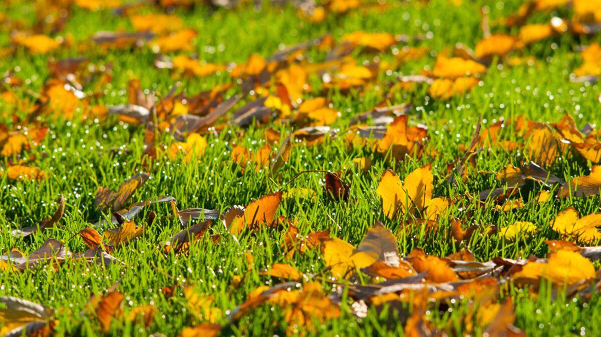Que Faire Au Jardin En Janvier jardin : comment se débarrasser des feuilles mortes
