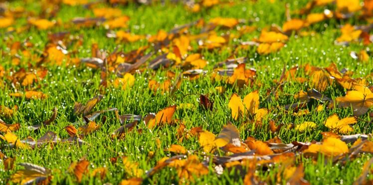 Jardin : comment se débarrasser des feuilles mortes ?