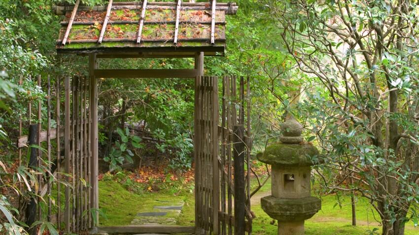Jardin japonais : quelles plantes et comment l'aménager ?