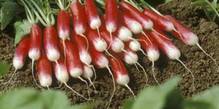 Participez au concours du plus beau jardin potager