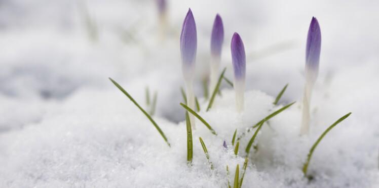 La neige, amie ou ennemie de mon jardin ?