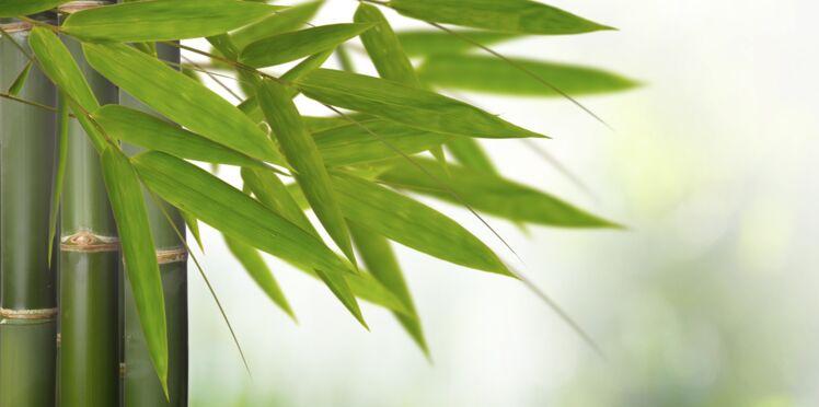 Le bambou, c'est top !