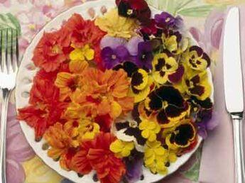 Des fleurs  belles à croquer