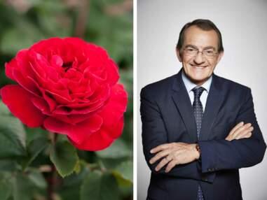 Rosiers : les roses des people en images