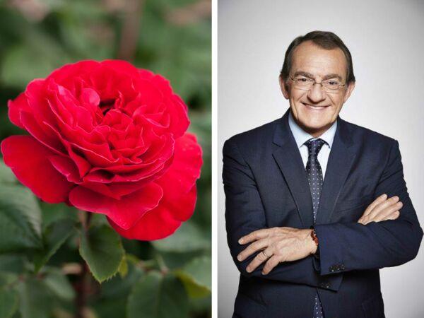 Les fleurs sauvages belles et faciles vivre femme for Coupe de cheveux julie andrieu