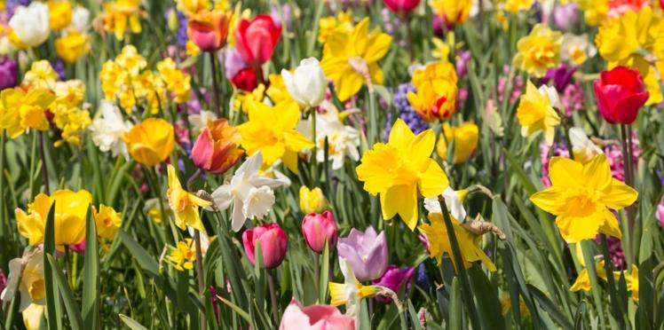 Narcisses, jacinthes, roses... Quelles fleurs pour parfumer mon jardin ?