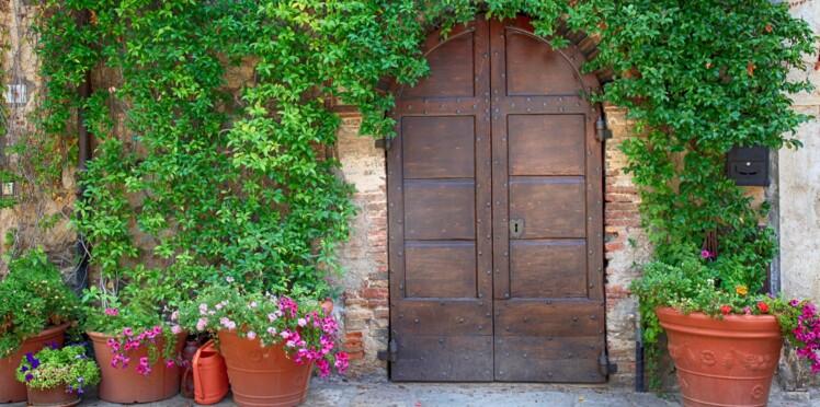 Quelles plantes grimpantes rapides et faciles à vivre pour habiller un mur ?