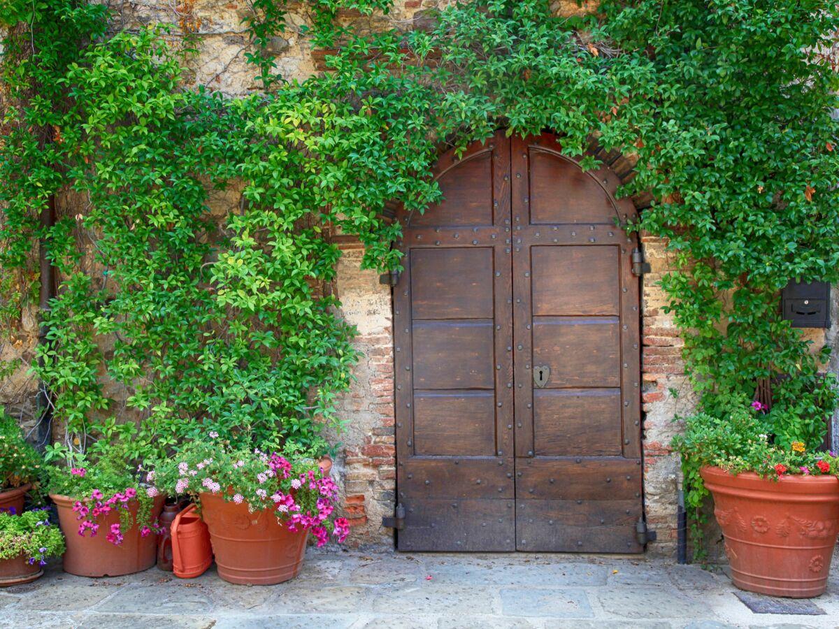 Plante Sur Les Murs quelles plantes grimpantes rapides et faciles à vivre pour