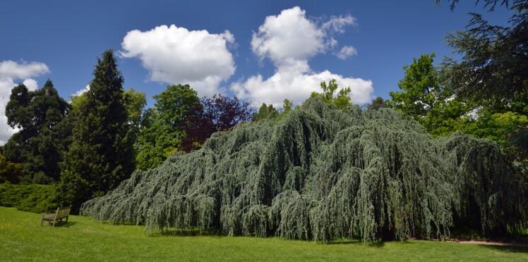 Plus bel arbre de l'année : votez pour votre préféré !