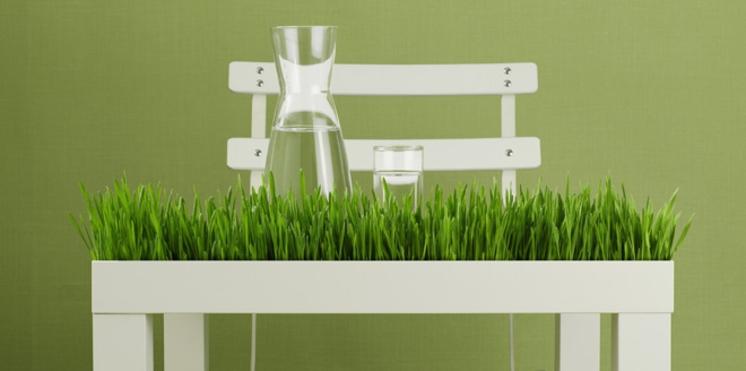 Réparer sa pelouse au sortir de l'été