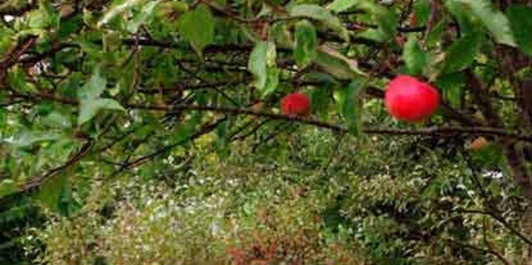 Ouverture d'un parc dédié aux végétaux, Terra Botanica, près d'Angers