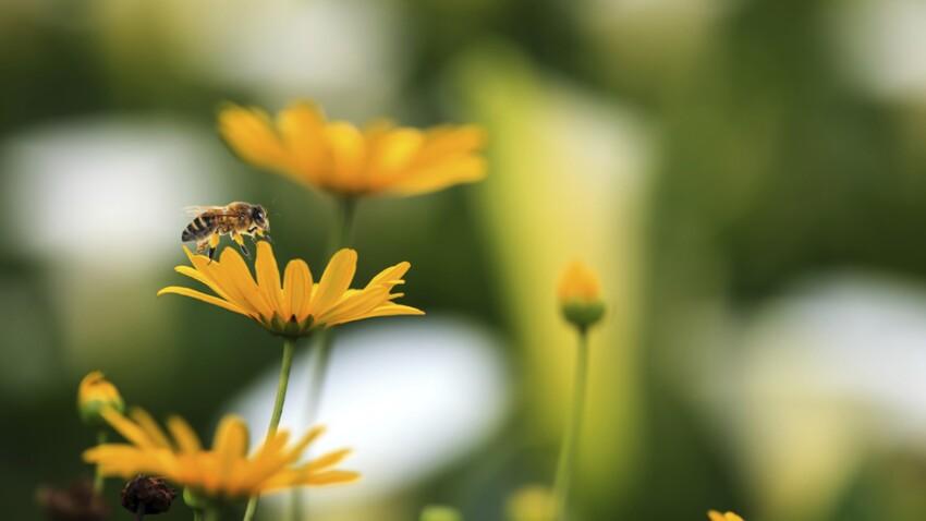 Un jardin sans pesticide ? C'est possible !