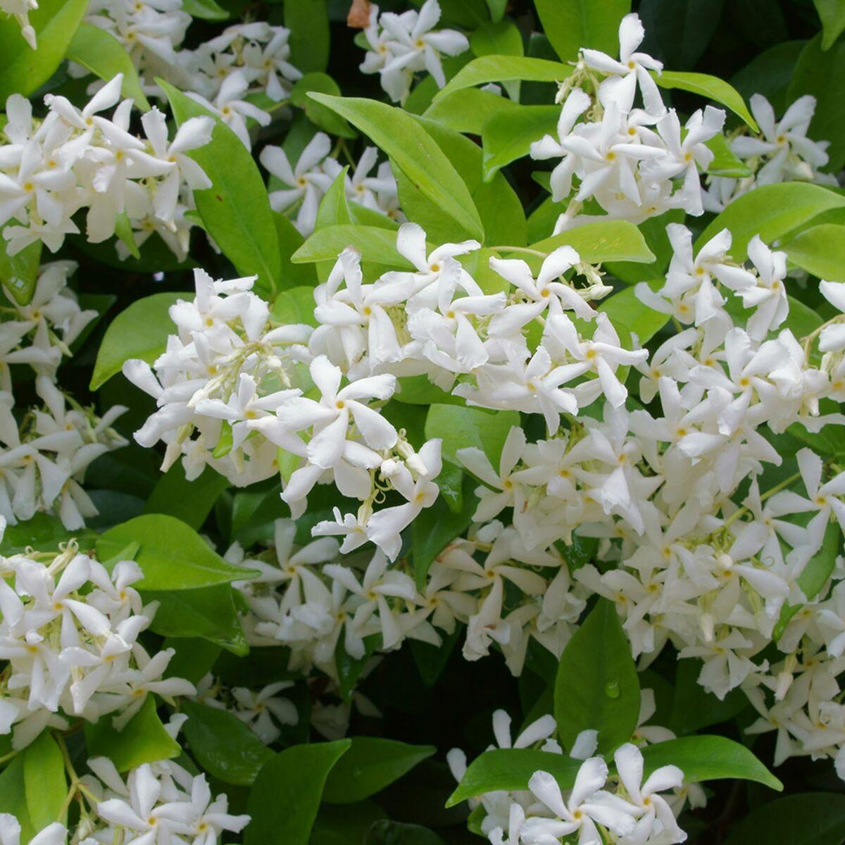 Plante Exterieur Qui Aime L Eau 10 fleurs qui poussent (presque) sans eau : femme actuelle