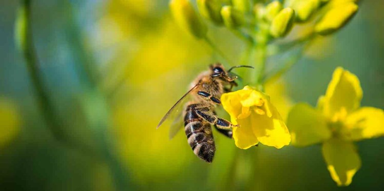 5 (excellentes) raisons de protéger les abeilles
