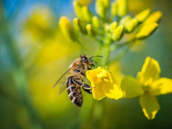 emballage en cire d abeille faire soi m me femme actuelle le mag. Black Bedroom Furniture Sets. Home Design Ideas