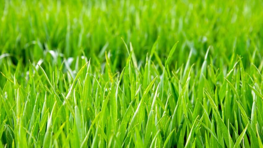 5 gestes pour avoir une belle pelouse