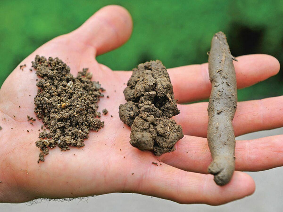 Argileux, sableux ou limoneux : quel type de sol dans mon jardin