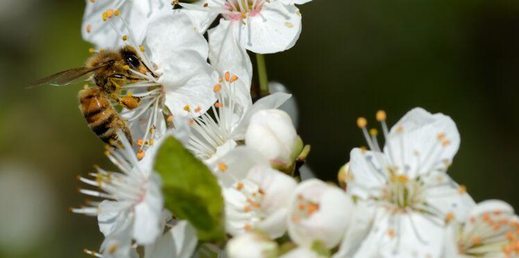 Auxiliaires : les compositions florales pour les attirer