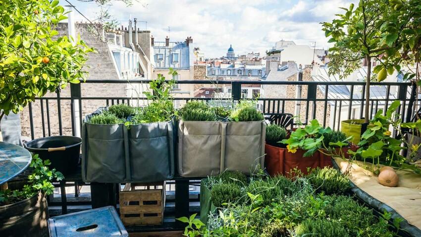 Balcon, terrasse, jardin : comment créer son potager facilement ?