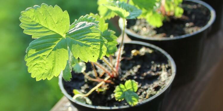 Calendrier lunaire : les constellations au service du jardin