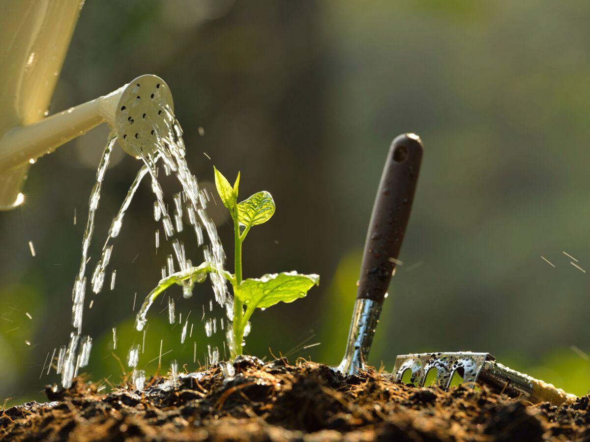 Comment Arroser Jardin Pendant Vacances comment arroser son potager ? : femme actuelle le mag