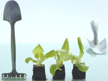 Comment cultiver des salades ?