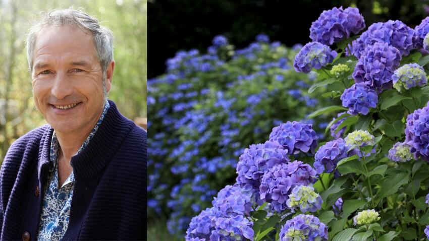 """Comment entretenir ses hortensias : les conseils de Stéphane Marie de """"Silence, ça pousse !"""""""
