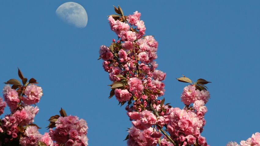 Comment jardiner avec la lune ?