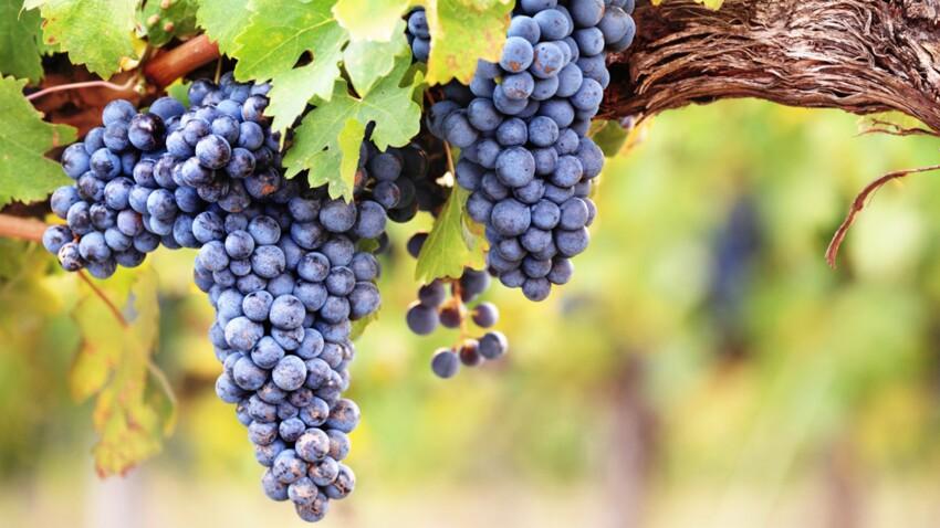 Comment planter et entretenir une vigne ?
