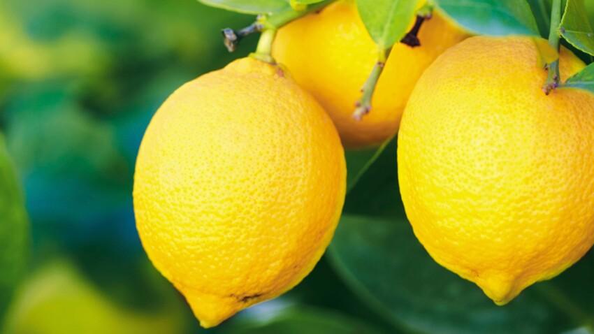 Comment planter un citronnier ?
