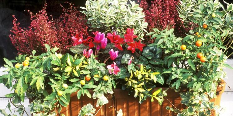 Comment réaliser une jardinière d'automne ?
