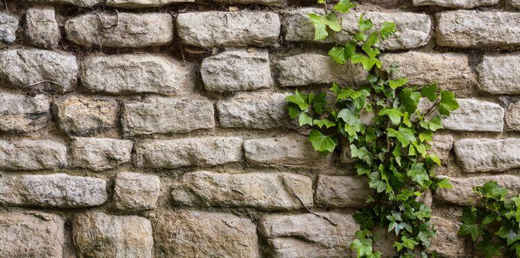 Comment se débarrasser du lierre sur un mur ?